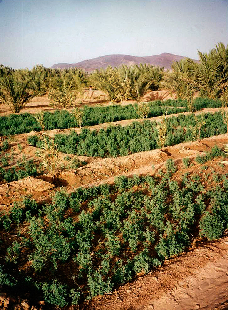 Morocco Photo Gallery Where Our Henna Comes From